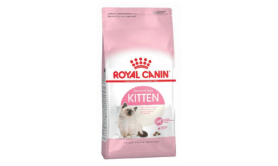 Royal C c. Kitten 4kg