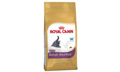 Royal C c. Kitten British Shorthair 2kg