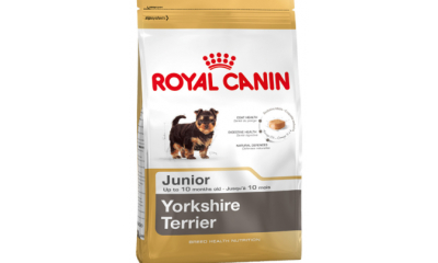 Royal C k. York.Terrier Junior 7,5kg